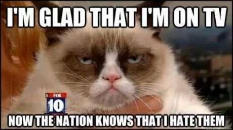 Grumpy cat on tv